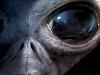 Big Eyed Grey